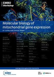 Molecular biology of mitochondrial gene expression